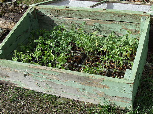 Hardening Off With a Cold Frame