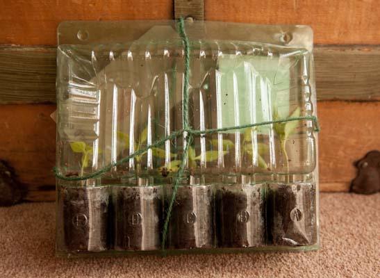 Potter Plants Packaging Back