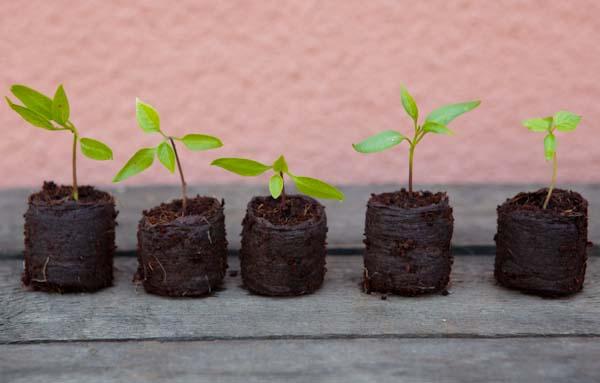 Potter Plants Plugs3