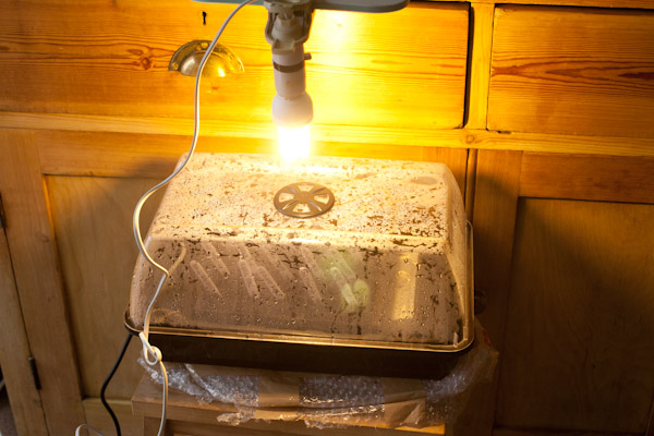 CFL Light over Propagator