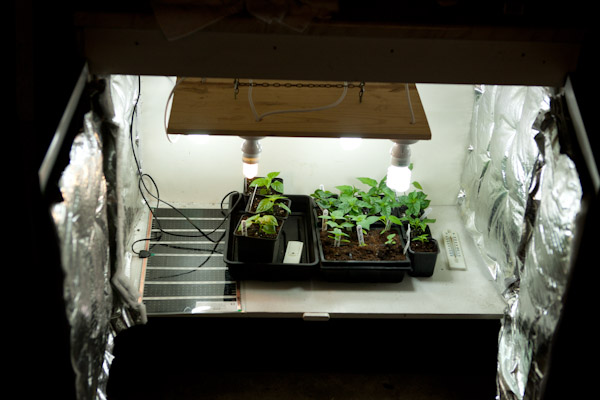 In the Grow Box2