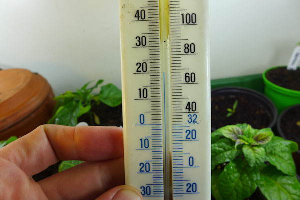 Temperature for Growing Peppers