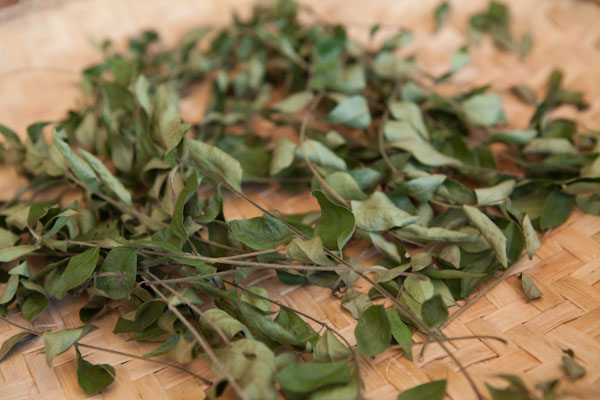 Drying Curry Leaves