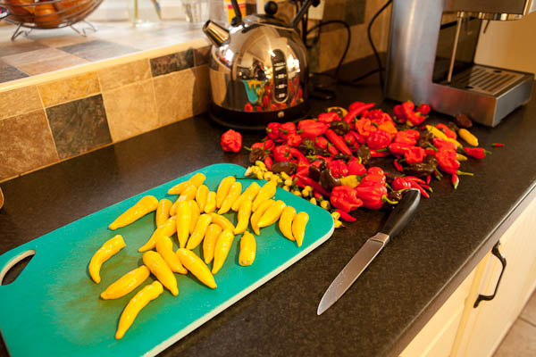 A Late Chilli Harvest